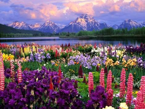 flowers-field-wallpaper