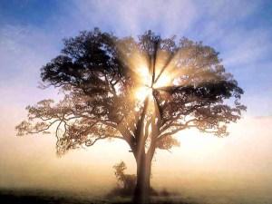 foto_sorgenia_albero_solare-1