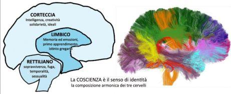 cervello_trino_materia_bianca-1024x417
