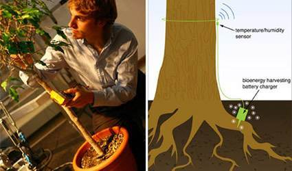 energia_elettrica_alberi_energia_elettrica_albero_prevenire_incendi_prevenire_incendio_energia_alberi_1